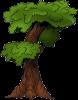 Дерево исполин