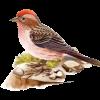 Биология Птицы